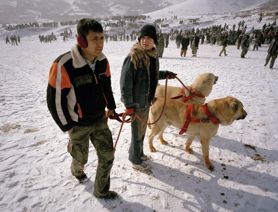 dogfight13 Азбука укуса: Шокирующие кадры собачьих боев
