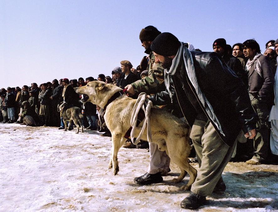 dogfight14 Азбука укуса: Шокирующие кадры собачьих боев