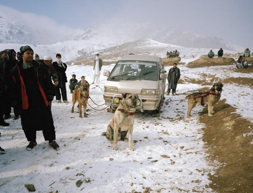 dogfight15 Азбука укуса: Шокирующие кадры собачьих боев