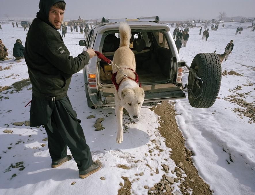 dogfight17 Азбука укуса: Шокирующие кадры собачьих боев