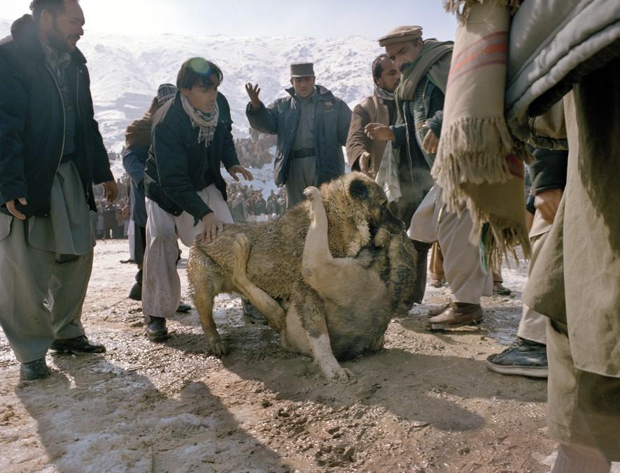 dogfight21 Азбука укуса: Шокирующие кадры собачьих боев
