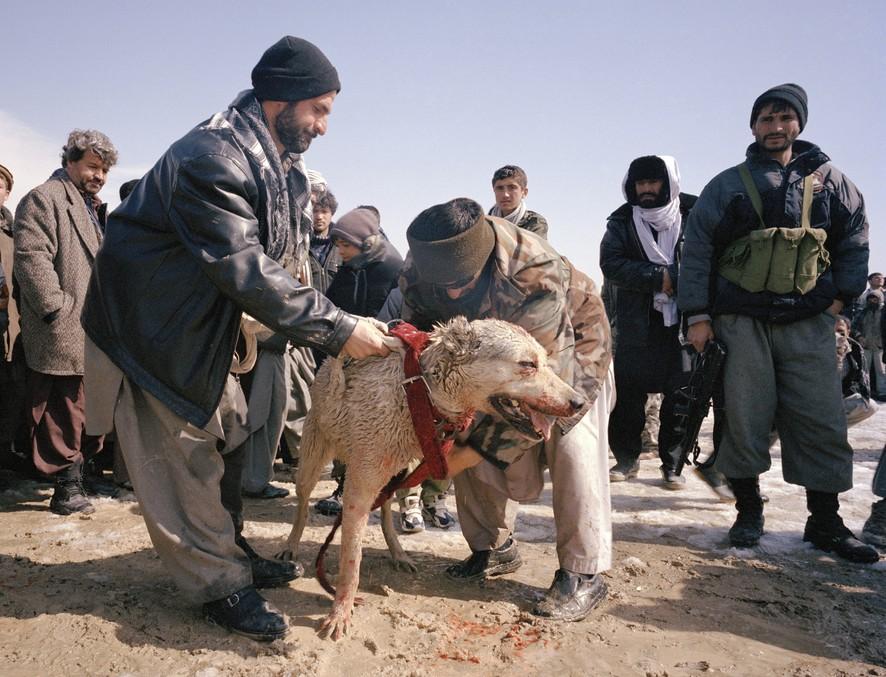 dogfight22 Азбука укуса: Шокирующие кадры собачьих боев