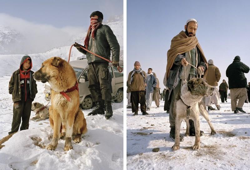 dogfight23 Азбука укуса: Шокирующие кадры собачьих боев