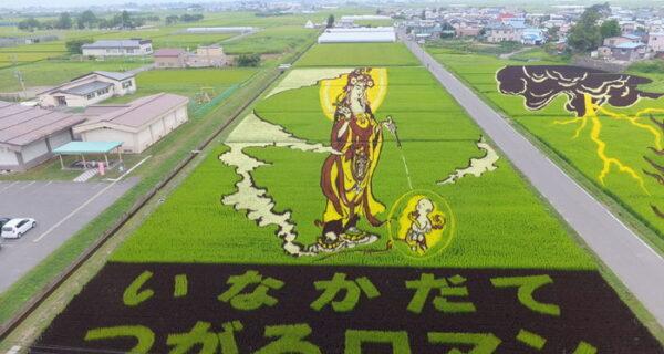 Необыкновенные картины на рисовых полях
