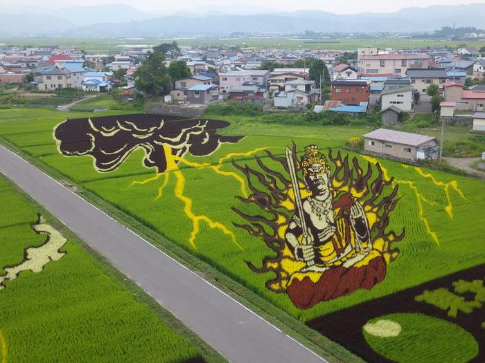 landart05 Необыкновенные картины на рисовых полях