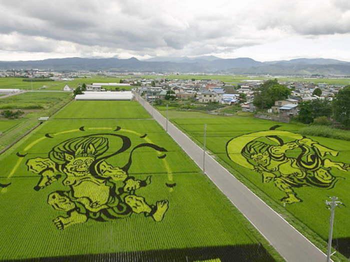 landart09 Необыкновенные картины на рисовых полях