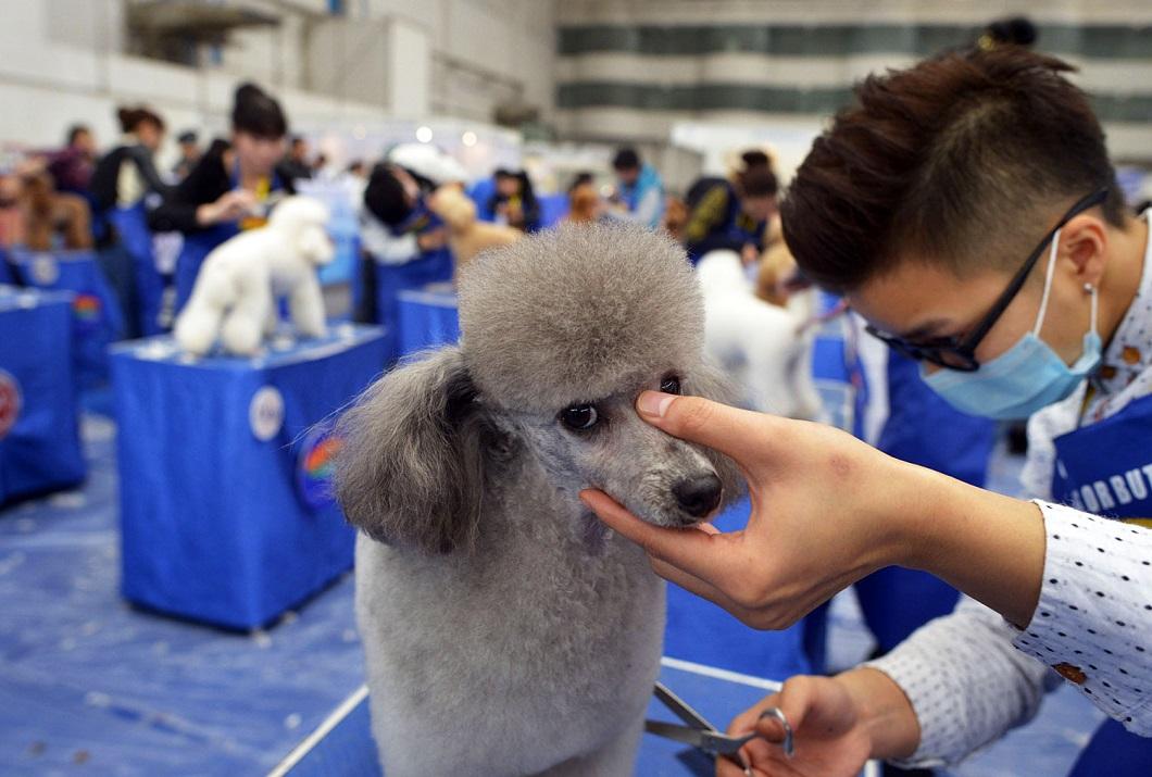luchshie foto zhivotnyx v noyab 11 Лучшие фотографии животных со всего мира за неделю