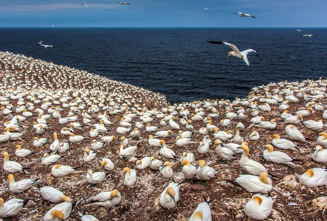 luchshie foto zhivotnyx v noyab 7 Лучшие фотографии животных со всего мира за неделю