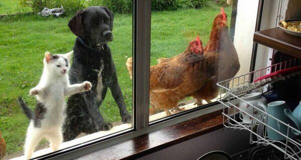 Нечеловеческое любопытство: что видят в окнах животные