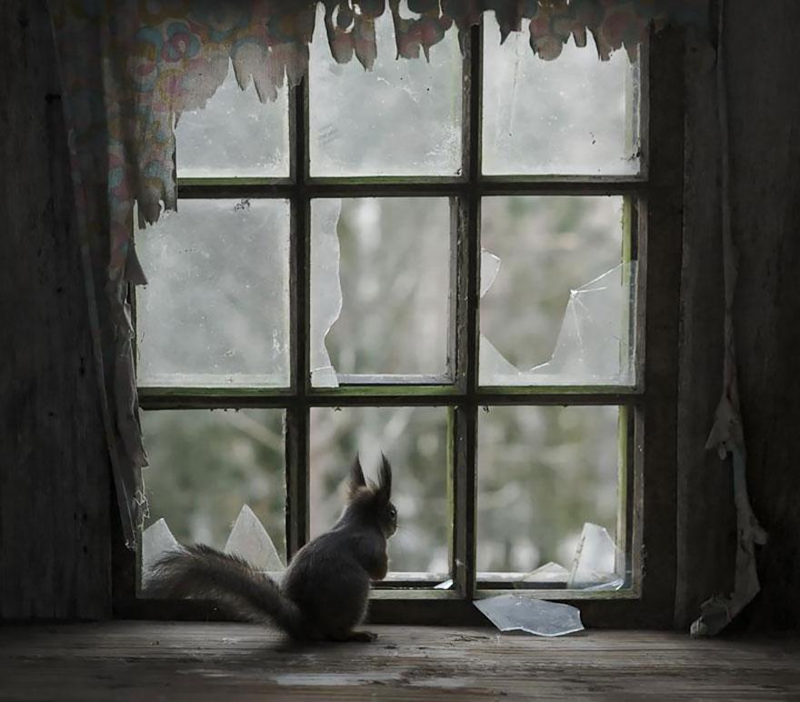throughwindow02 Нечеловеческое любопытство: что видят в окнах животные