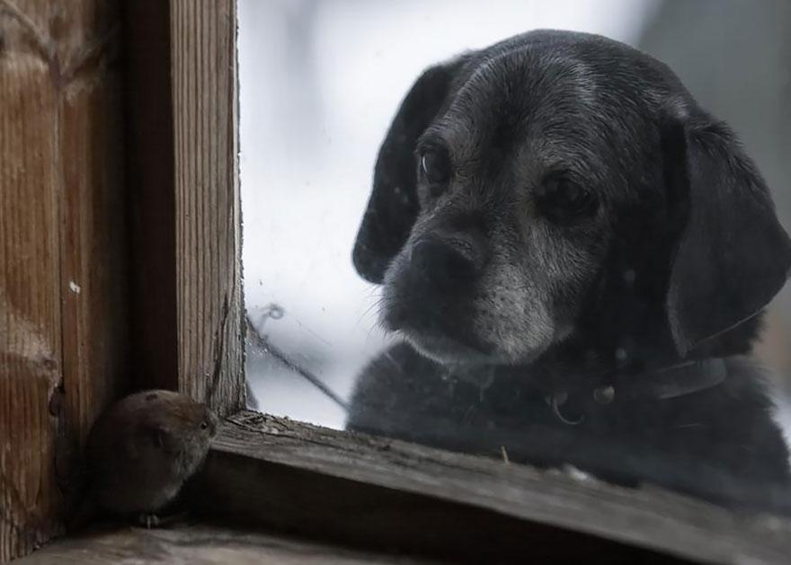 throughwindow03 Нечеловеческое любопытство: что видят в окнах животные