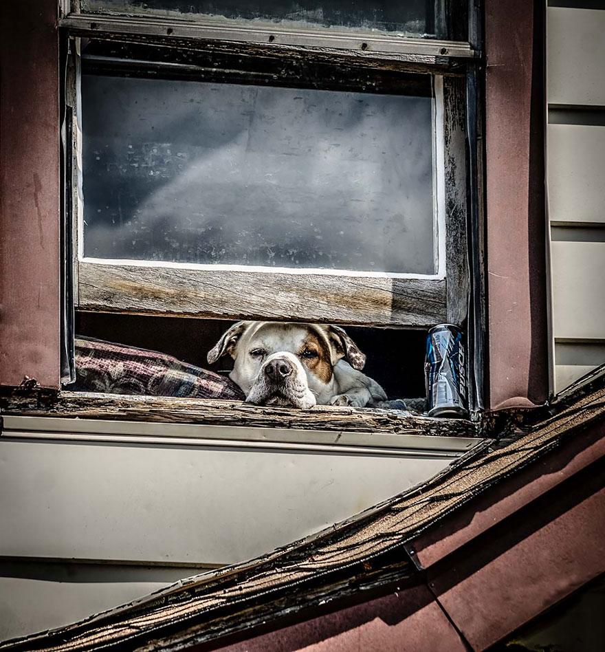 throughwindow08 Нечеловеческое любопытство: что видят в окнах животные