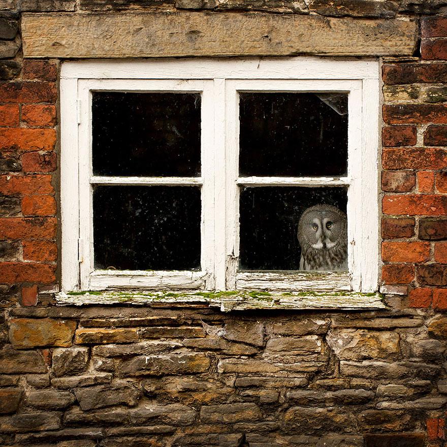 throughwindow09 Нечеловеческое любопытство: что видят в окнах животные