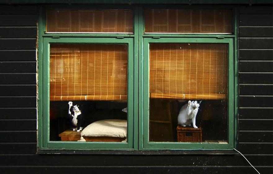 throughwindow11 Нечеловеческое любопытство: что видят в окнах животные
