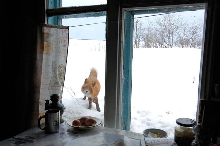 throughwindow14 Нечеловеческое любопытство: что видят в окнах животные