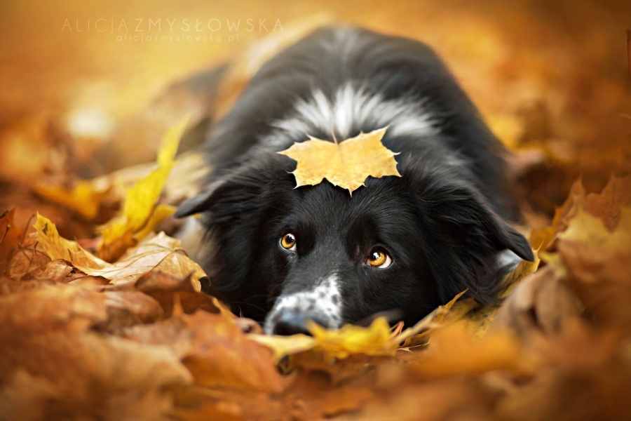 zmyslowska02 Таких крутых портретов собак еще никто не делал