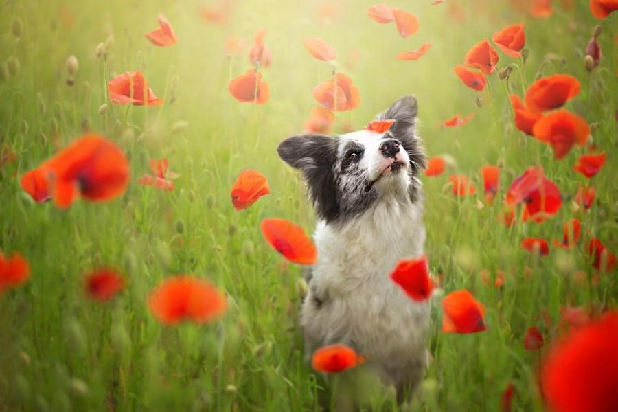zmyslowska03 Таких крутых портретов собак еще никто не делал