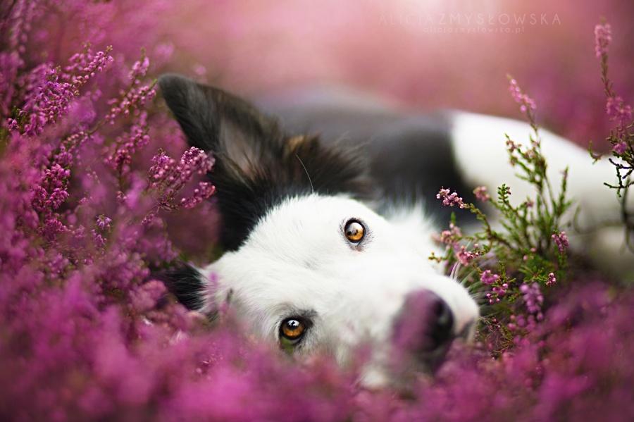 zmyslowska04 Таких крутых портретов собак еще никто не делал