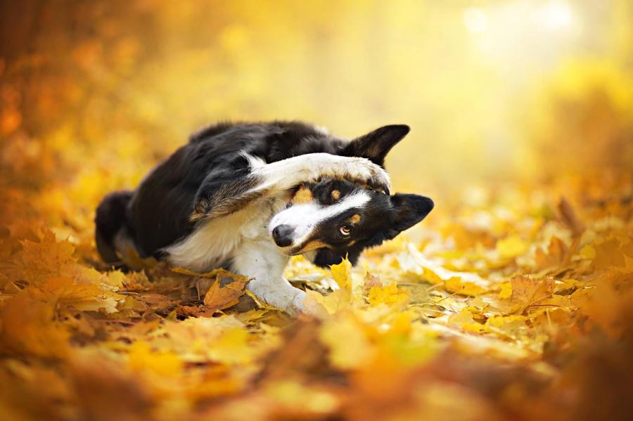 zmyslowska06 Таких крутых портретов собак еще никто не делал
