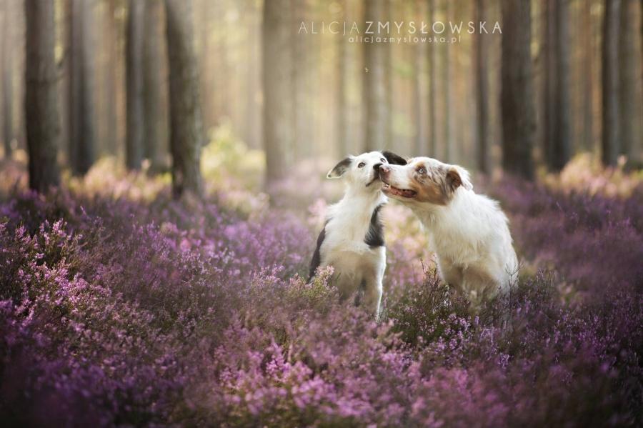 zmyslowska07 Таких крутых портретов собак еще никто не делал