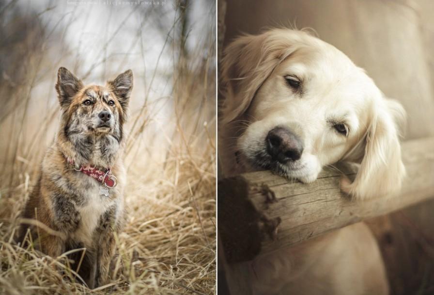 zmyslowska09 Таких крутых портретов собак еще никто не делал
