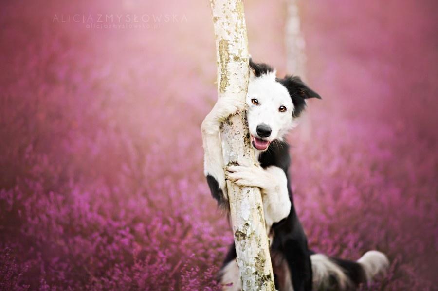 zmyslowska12 Таких крутых портретов собак еще никто не делал