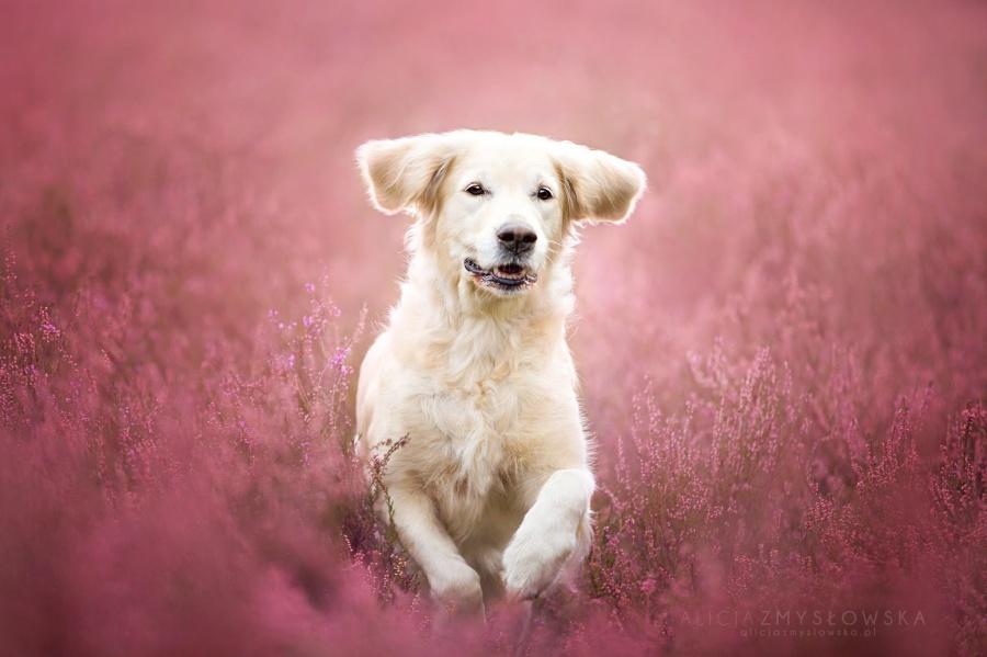 zmyslowska15 Таких крутых портретов собак еще никто не делал