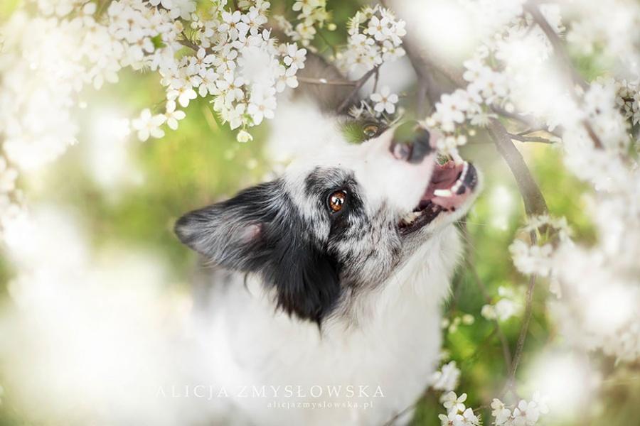 zmyslowska17 Таких крутых портретов собак еще никто не делал