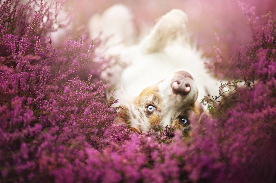 zmyslowska20 Таких крутых портретов собак еще никто не делал