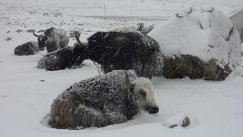 717 10 сильнейших снегопадов в истории