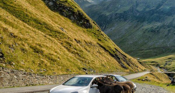 Трансфэгэрашское шоссе – одна из красивейших трасс Европы