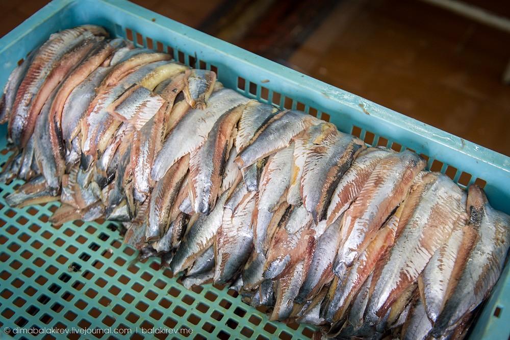 Fishplant03 Как работает рыбный завод в Магадане