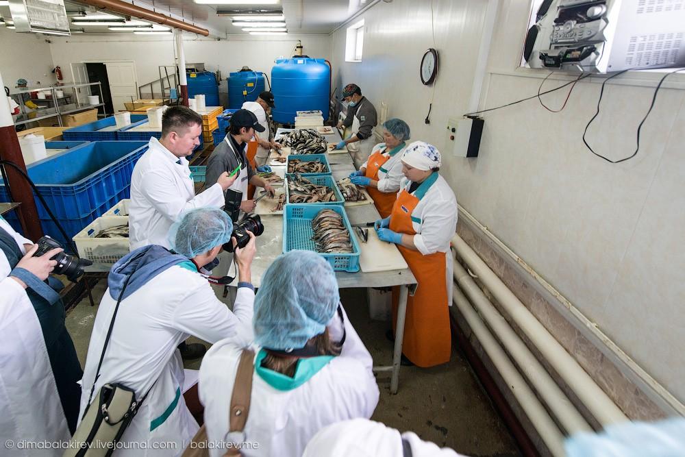 Fishplant07 Как работает рыбный завод в Магадане