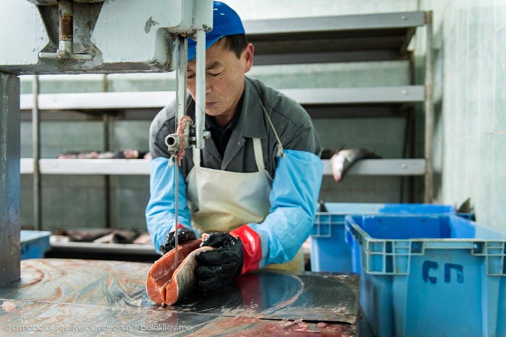 Fishplant08 Как работает рыбный завод в Магадане