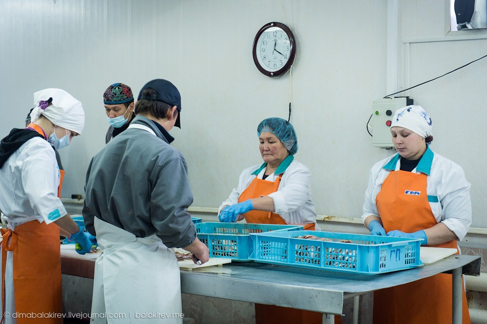 Fishplant09 Как работает рыбный завод в Магадане