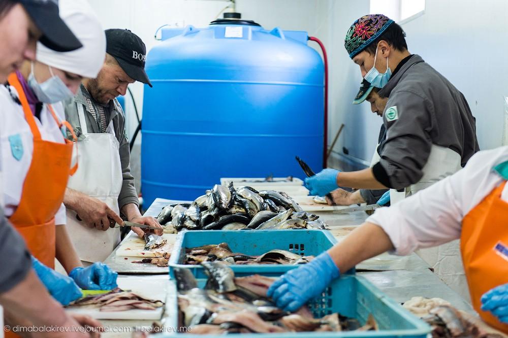 Fishplant13 Как работает рыбный завод в Магадане