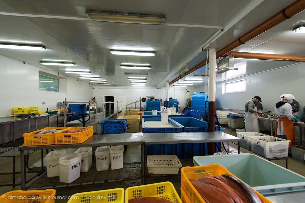 Fishplant14 Как работает рыбный завод в Магадане