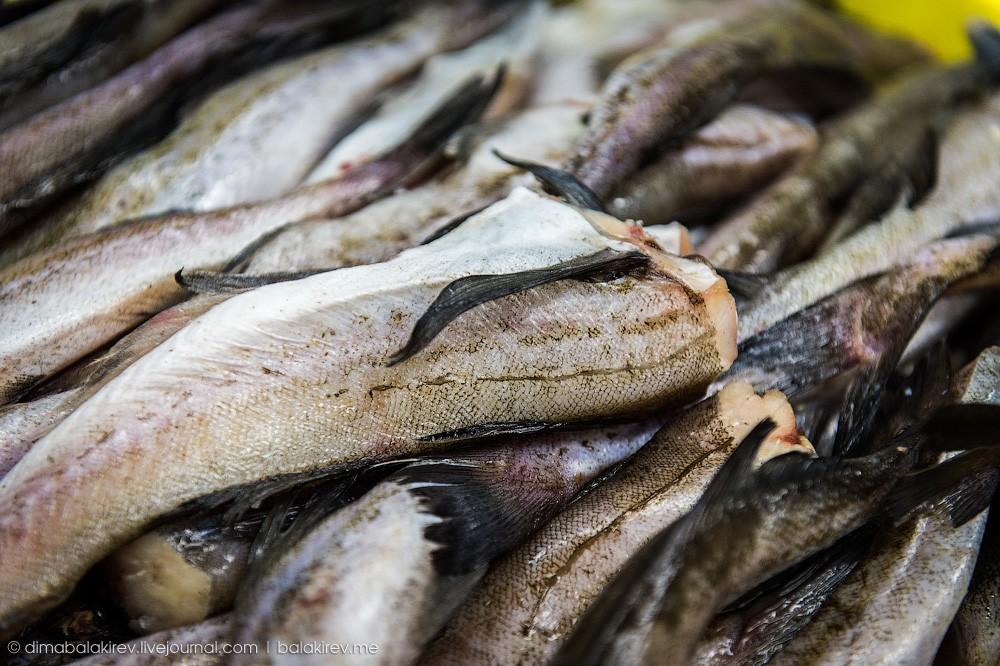 Fishplant15 Как работает рыбный завод в Магадане