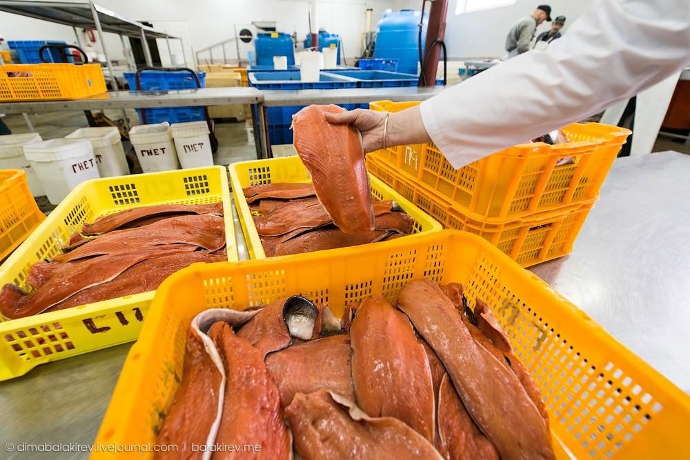 Fishplant18 Как работает рыбный завод в Магадане