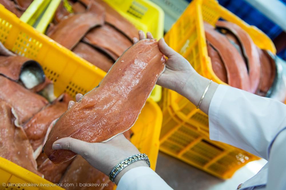 Fishplant19 Как работает рыбный завод в Магадане