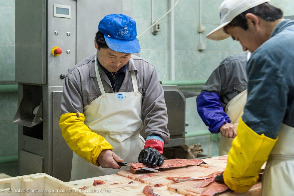 Fishplant22 Как работает рыбный завод в Магадане