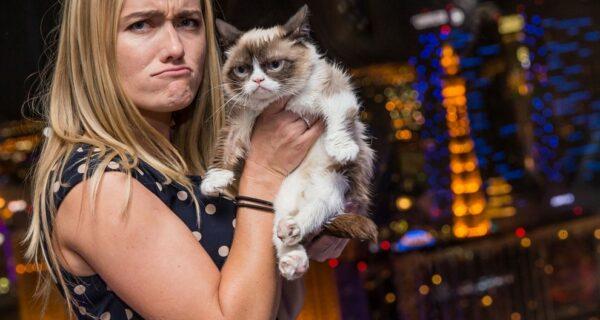 10 заветных секретов успеха самого богатого кота вмире