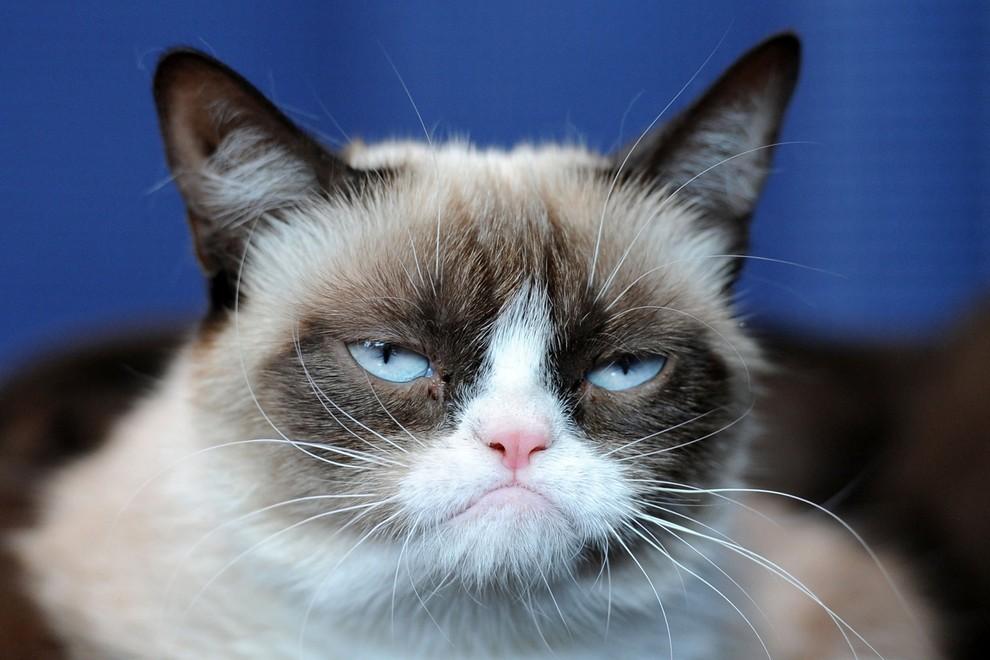 GrumpyCat02 10 заветных секретов успеха самого богатого кота в мире