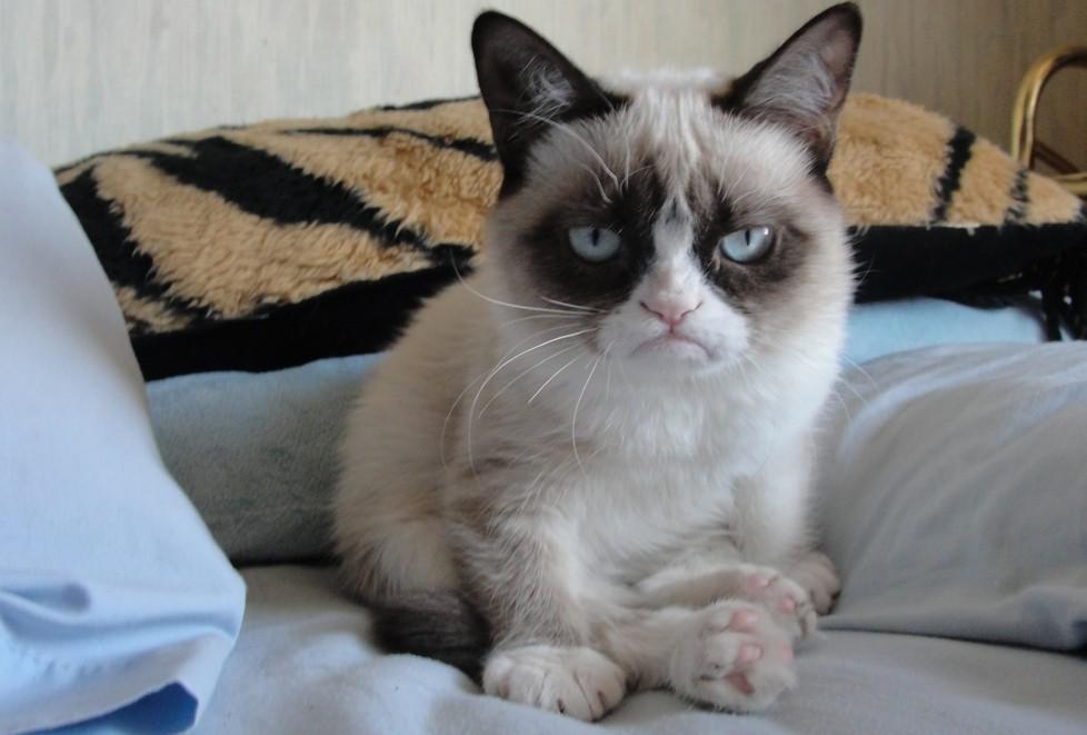GrumpyCat03 10 заветных секретов успеха самого богатого кота в мире