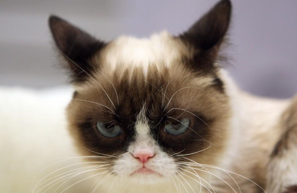 GrumpyCat04 10 заветных секретов успеха самого богатого кота в мире