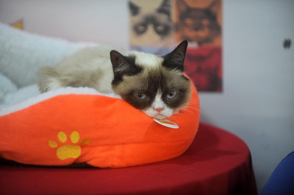 GrumpyCat08 10 заветных секретов успеха самого богатого кота в мире