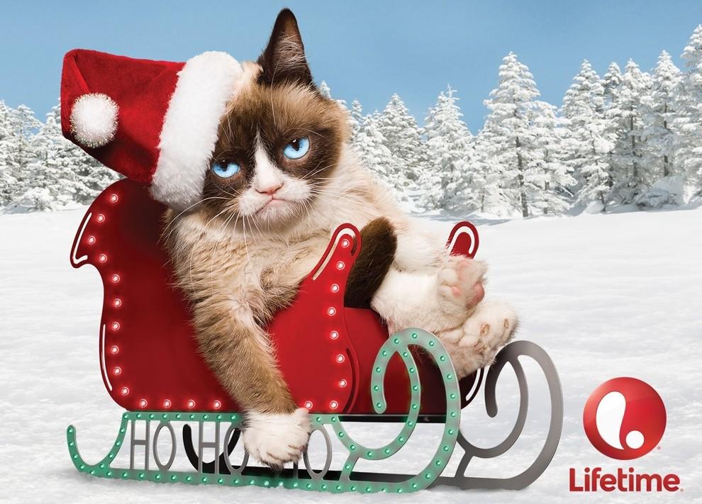 GrumpyCat09 10 заветных секретов успеха самого богатого кота в мире