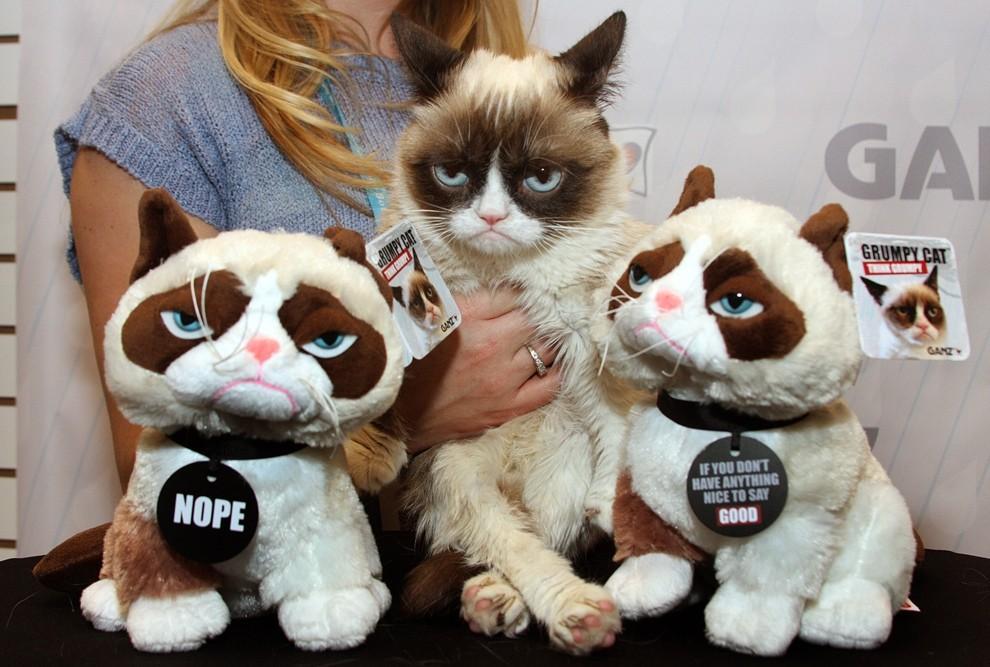 GrumpyCat10 10 заветных секретов успеха самого богатого кота в мире