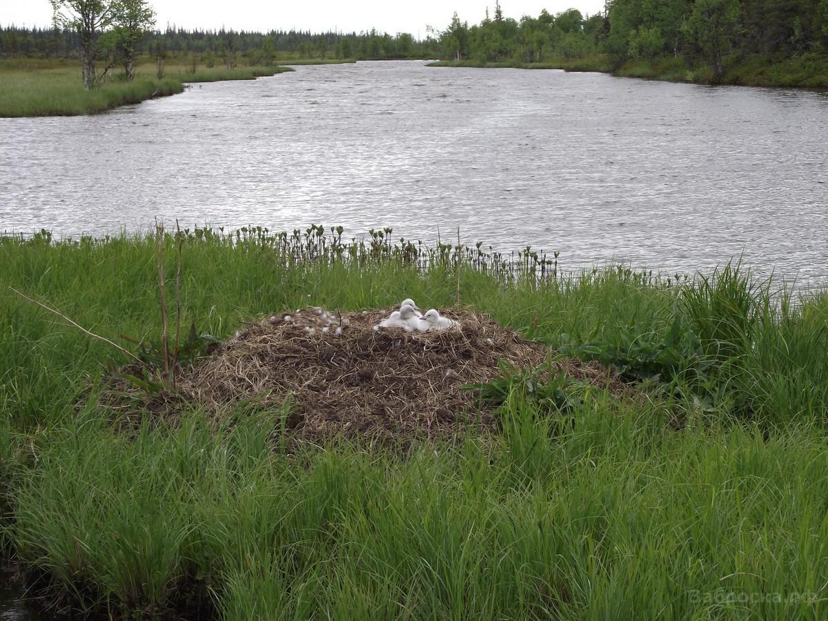 Lapland19 Путешествие в страну летучего камня