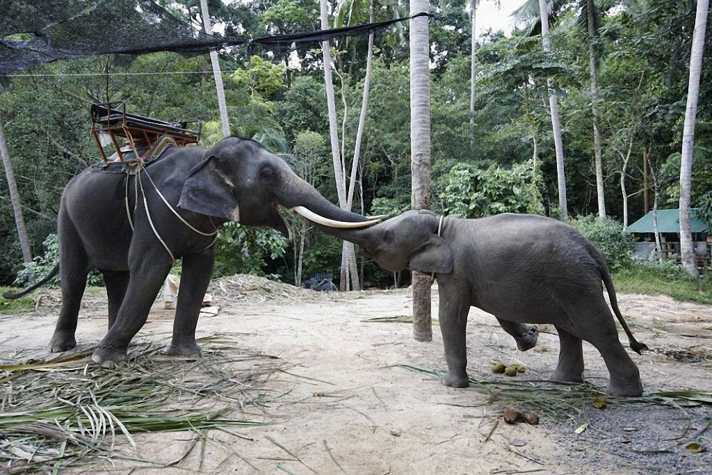 Thailand18 30 мест, которые нужно посетить в Таиланде